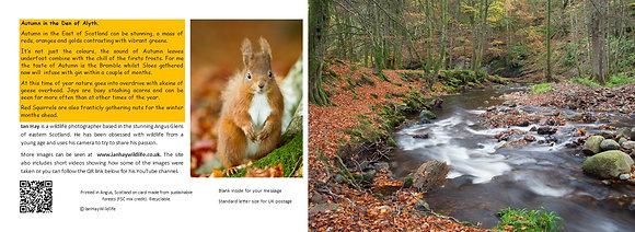 Autumn Wood Card