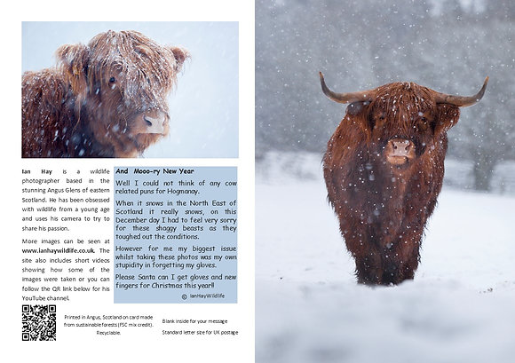 and a Moo ry New Year Card
