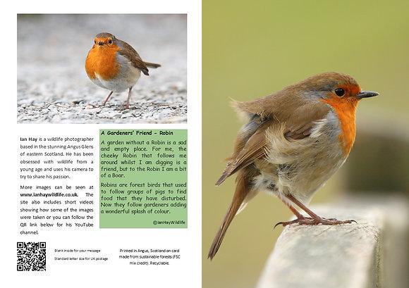 Robin Gardeners Friend Card