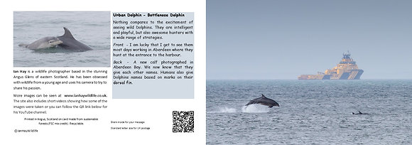 Urban Dolphin Card