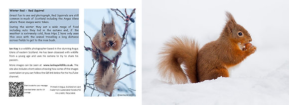 Winter Red Squirrel Card
