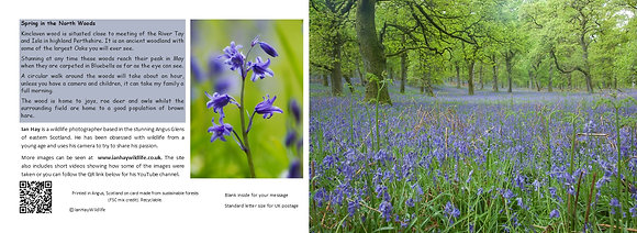 Spring in the North Wood Card