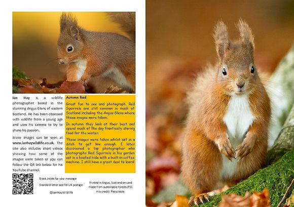 Autumn Red Squirrel Card