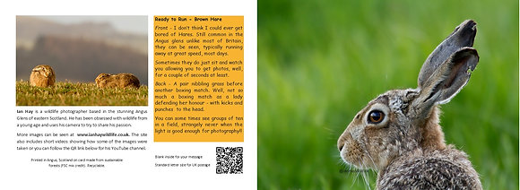 Spring Hare Card