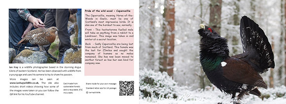 Capercaillie Card