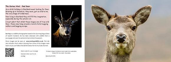 Doe a deer card