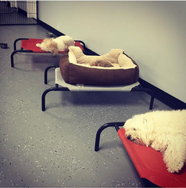 Pup-N-Cuts Daycare & Boarding