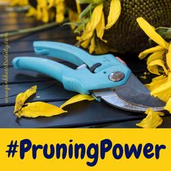 #PowerOfPruning