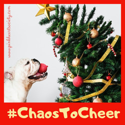 From Chaos To Cheer