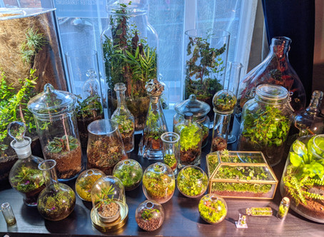 """The world of plants is utterly enchanting and I try to add a bit of that magic to each terrarium"""
