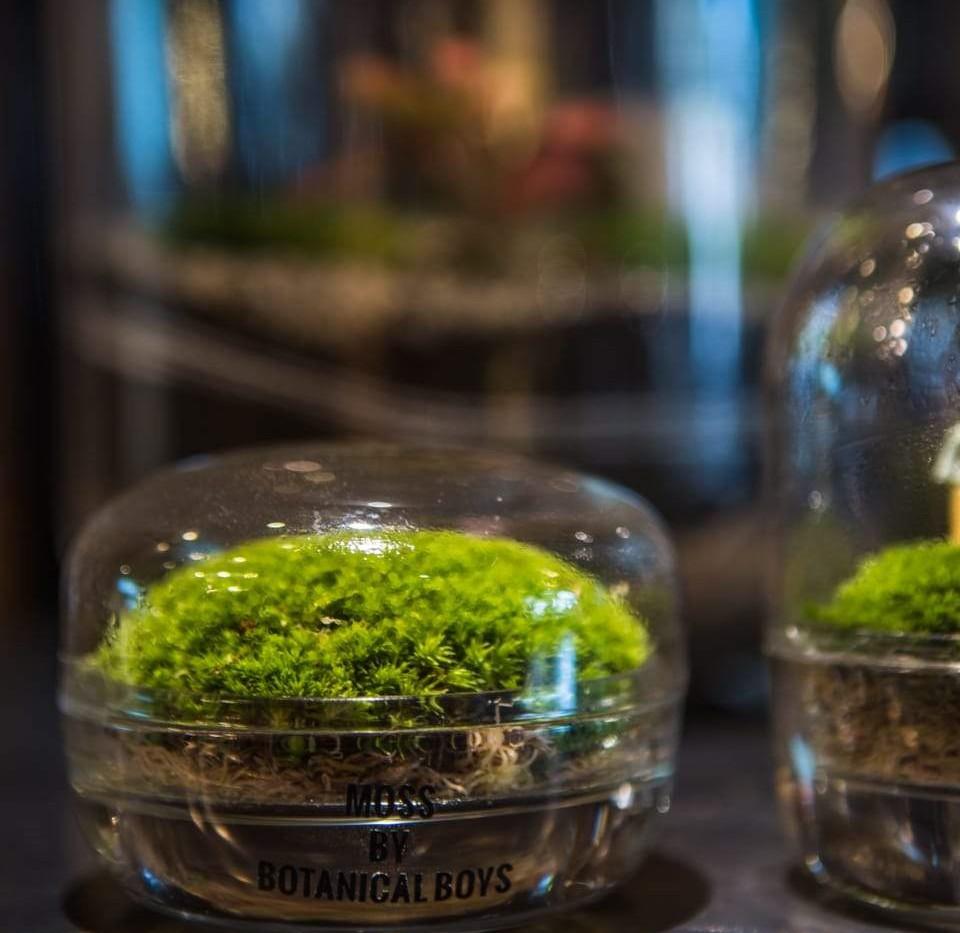 K2 - Moss Dome Terrarium