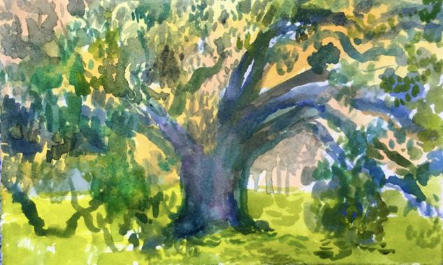 McDonogh Oak, City Park, New Orleans