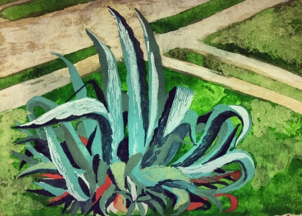 Agave in Old Jefferson