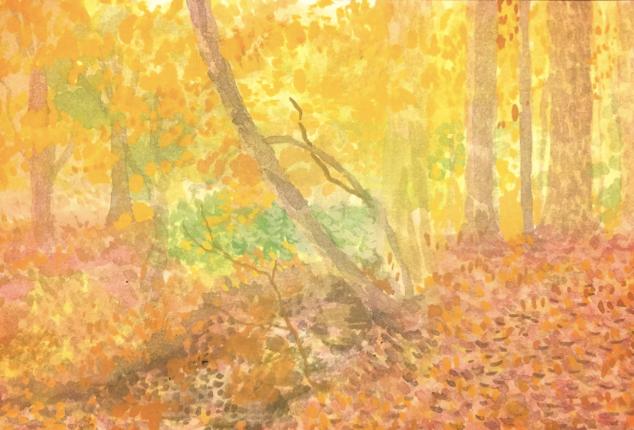 Autumn in Chapel Hill, NC