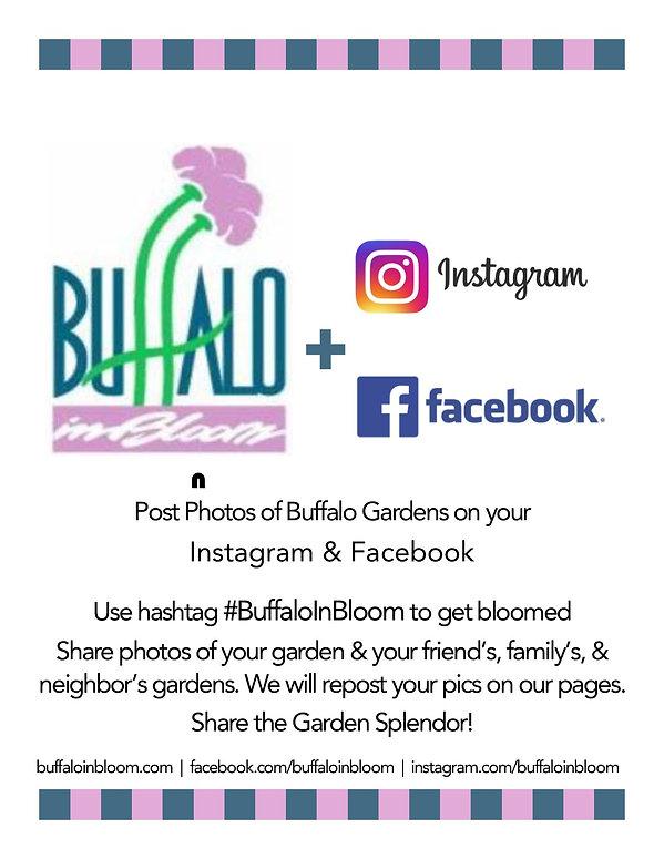 Buffalo In Bloom 2sm.jpg