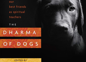 The Dharma of Dogs - Our Best Friends as Spiritual Teachers