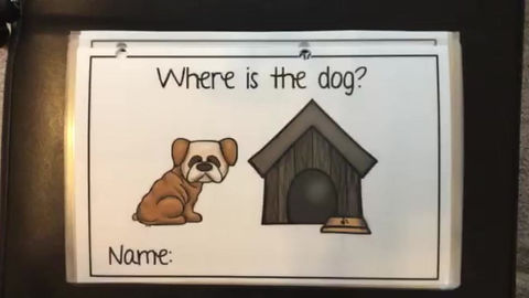 Where is the Dog