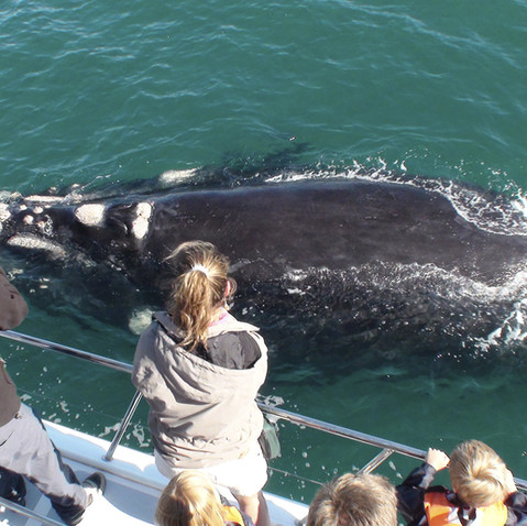 Whale watching adventure