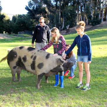 Experience the happy farm animals