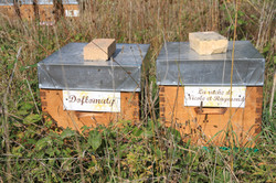 Doflomaty, La ruche de Nicole et Ray