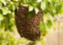 essaim d'abeilles Lyon