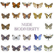 GRID mariposas.jpg