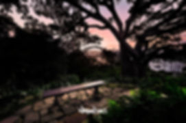 Wendys Secret Garden pink sunrise Moreton Bay Fig silhouette landscape photography by Nathan Dukes Art
