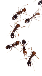 fire-ants-1790262WOp_edited_edited.png