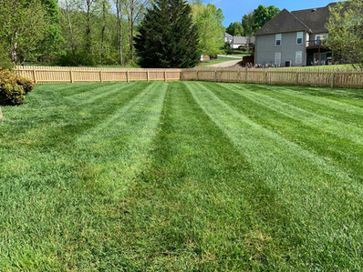 Lawn Care - Mowing