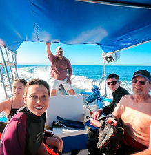 tour to whaleshark in la paz baja california sur with trip and homes unique experiences including food and drinks