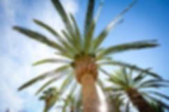 palm trees in baja california sur