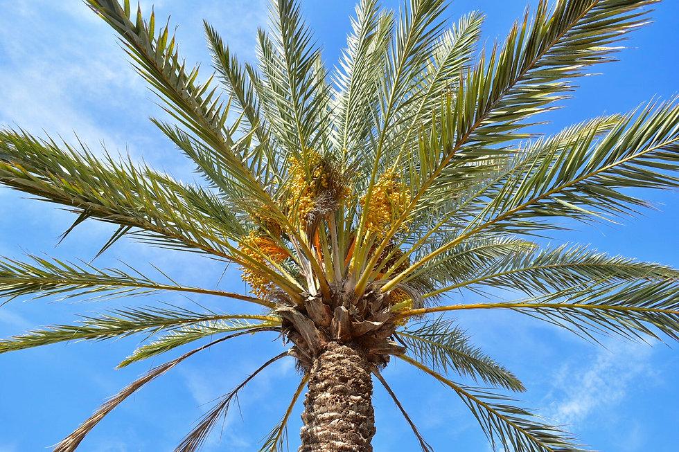 venta de palmas semillas organicas baja