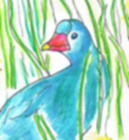 Purple Gallinule.jpeg
