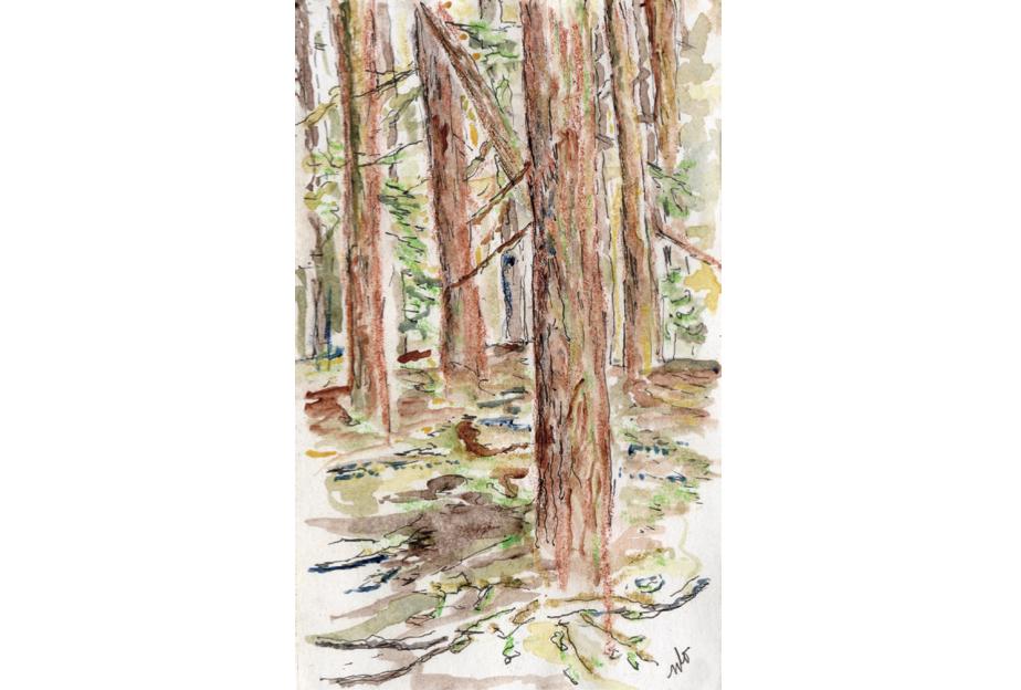 Olesen_Postcard_redwoods.png