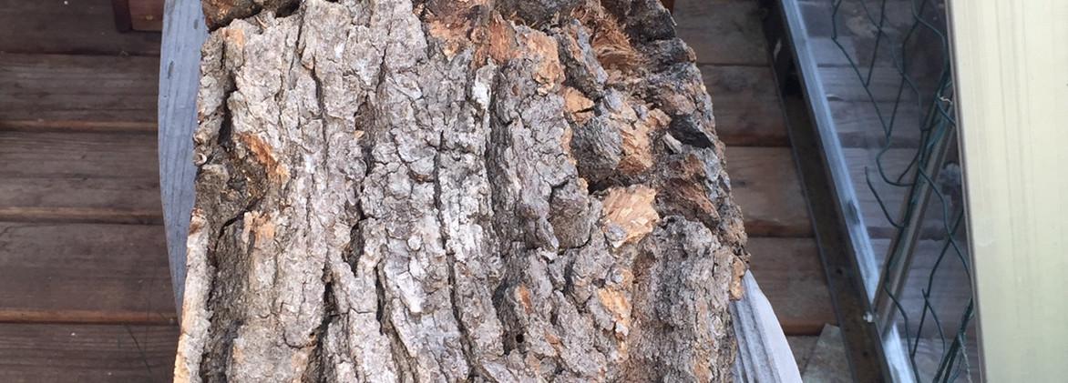 Oak Wedge