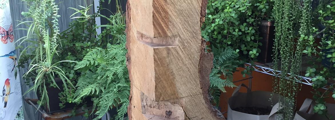 Boundary Oak VENUS*