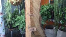 Boundary Oak VENUS