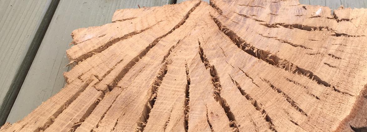 Oak Quarter Slice
