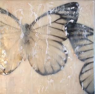 McDermott.Butterflies.6x6.Encaustic.75.jpg