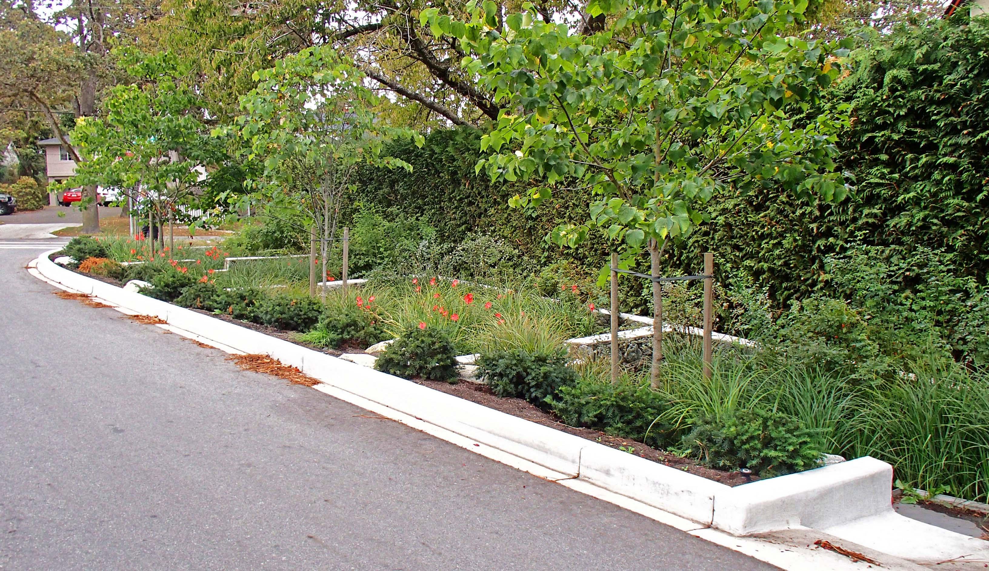 terraced-rain-garden-02jpg