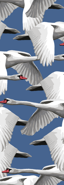 Schwäne / Swans