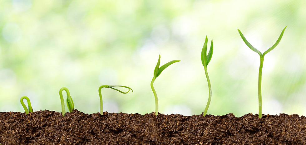 Plants growing from soil - Plant progres