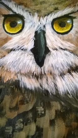 Owl close