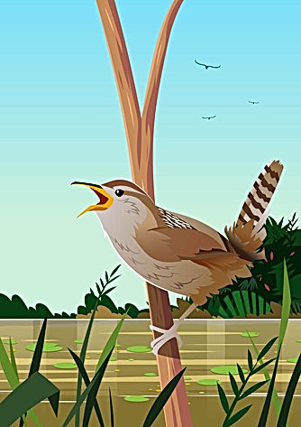 marsh-wren-vector.jpg