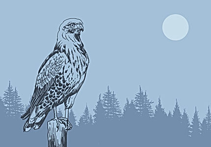 buzzard-in-the-forest-vector.jpg