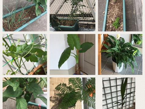 ジャカランタ、椰子の木、スタジオに💕