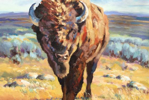 Stony Plain Bison