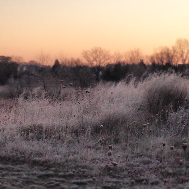 Frosted Morning
