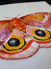 Io Moth (detail)