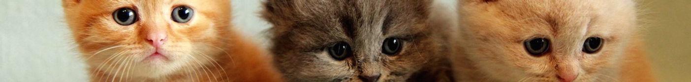 kitten-banner.jpg